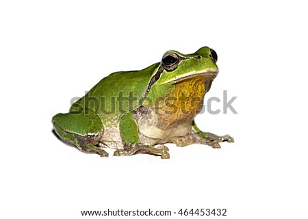 funny little frog on a white background #464453432