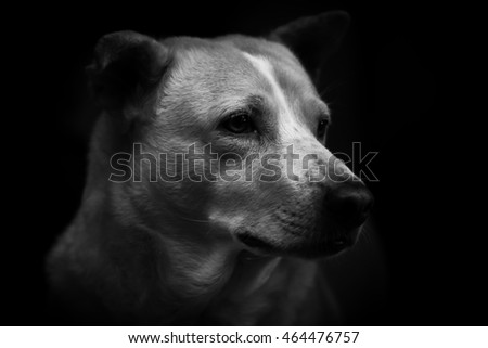 Dog Black and White Photography, Portrait dog.