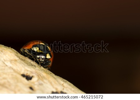 Cute red ladybird. Yellow tree body and dark natural background. Macro photography. #465215072
