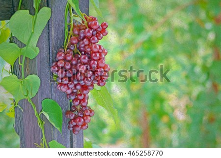 Rural grapes,  oil paint style #465258770