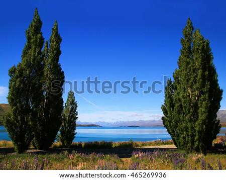Lake Tekapo in New Zealand with trees on both side #465269936