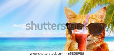Funny image of a cat with cocktail on the beach