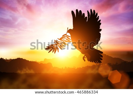 Silhouette of Dove carrying olive leaf branch .Freedom concept  and international day of peace 2020 Royalty-Free Stock Photo #465886334