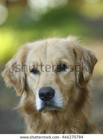 Portraits of beautiful dogs! #466270784