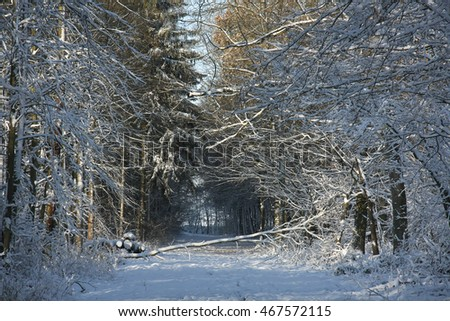 Winter forest #467572115