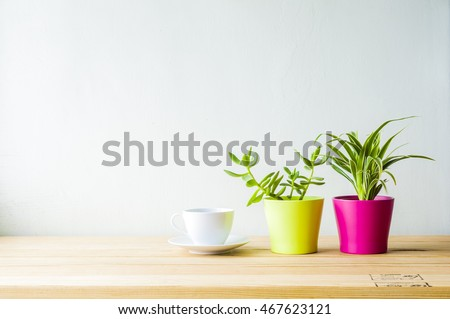 Indoor plant on wooden table and white wall #467623121