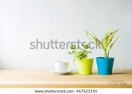 Indoor plant on wooden table and white wall #467623145