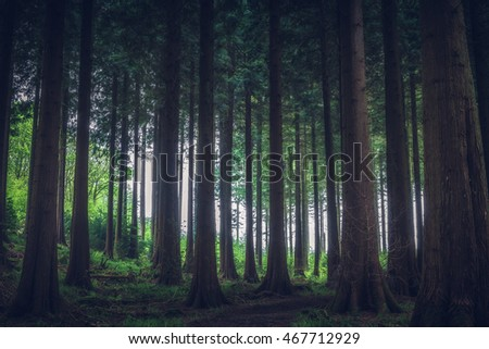 forest in cornwall idless uk england. #467712929