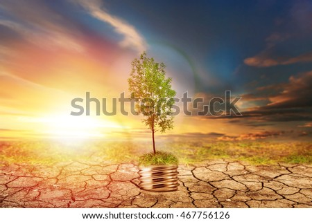 Green tree in lamp on dry soil with moss background #467756126