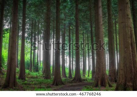 idless woods in cornwall england uk. #467768246