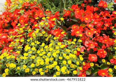 Colorful flowers #467951822