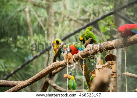 The either Red, Blue and yellow Macaw or the Blue and gold Macaw (Ara ararauna) in Brazil. It is a member of the group of large Neotropical parrots. #468525197