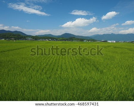 Green rice field and blue sky #468597431