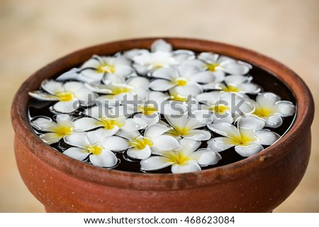 Many plumeria floating in pottery #468623084