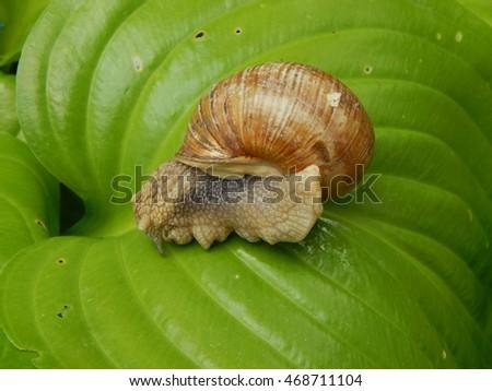 Snail crawling the green grass in garden  #468711104