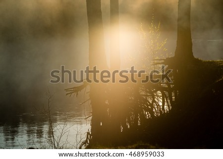 foggy morning on the river in forest with reflections and trees on both sides of the stream #468959033