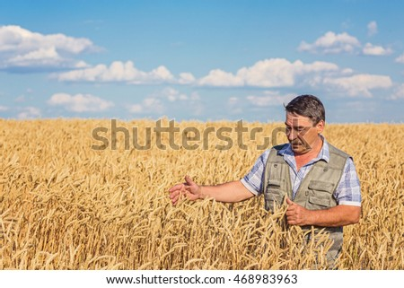 Satisfied mature farmer touching with care his ripe wheat field before the harvest, vertical copy space #468983963