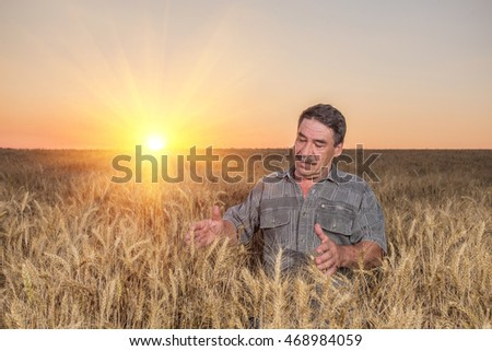 Satisfied mature farmer touching with care his ripe wheat field before the harvest, vertical copy space #468984059