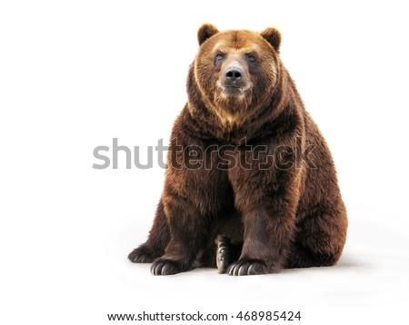 Bear on white