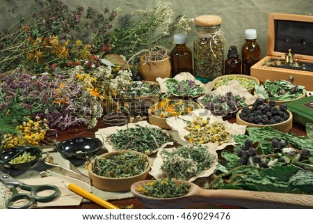 Set healing herbs. Dried herbs for use in alternative medicine.Herbal medicine, phytotherapy medicinal herbs.For preparation of infusions, decoctions, tinctures, powders, ointments, tea. #469029476