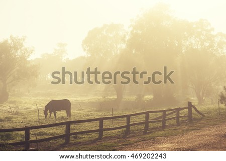 Horse grazes as early morning sun rises on a beautiful country property
