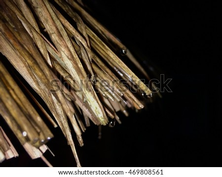 Thatched roof #469808561