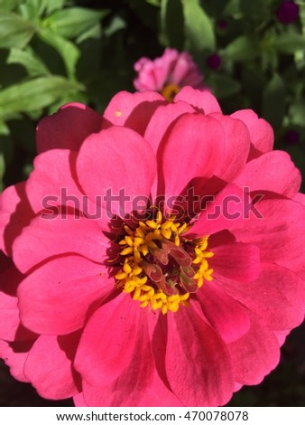 Bloom Royalty-Free Stock Photo #470078078