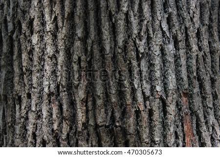 Wood texture. Old tree #470305673