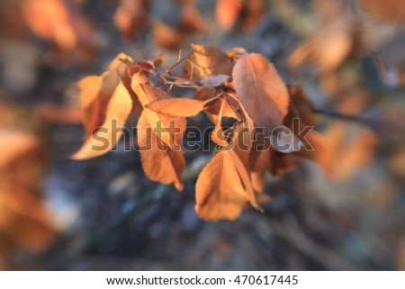 Abstract blurred  nature background/ Bokeh. Toned image, soft focus, vintage style #470617445