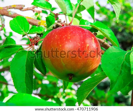 red apples grow on a branch against the sky #470711906