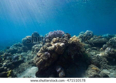 Coral #471510578