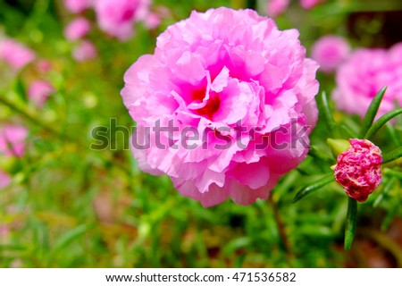 Pink flowers #471536582