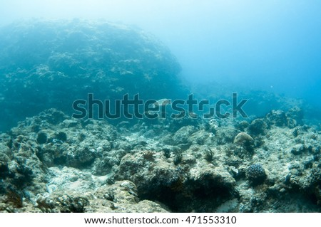 A sea turtle swims. #471553310