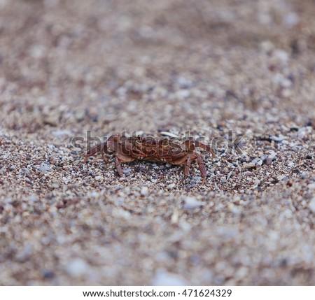Crab on the beach, closeup view, small DOF #471624329