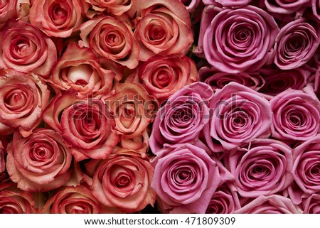 Rose flowers background #471809309