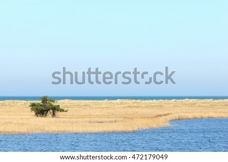 walking through the Western Pomerania Lagoon Area National Park with its beach, reed and dunes landscapes. Darsser ort is the peak of peninsular drass zingst (Mecklenburg-Vorpommern, Germany) Royalty-Free Stock Photo #472179049