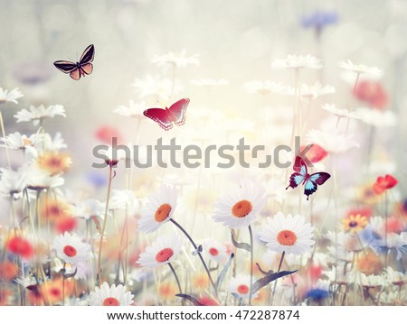 Meadow with wild flowers at sunset #472287874