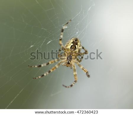 spider on web closeup #472360423
