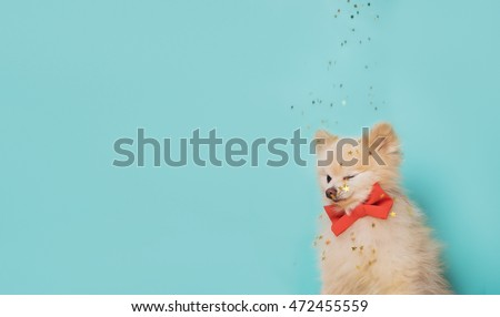 image of little dog with orange bow