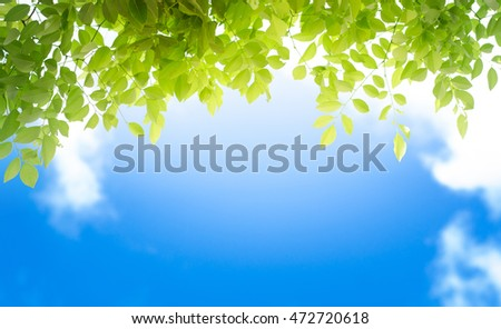 natural background with blue sky and green leaf for web background design