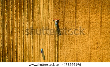 Harvester machine working in field . Combine harvester agriculture machine harvesting golden ripe wheat field. Agriculture. Aerial view. From above. Royalty-Free Stock Photo #473244196