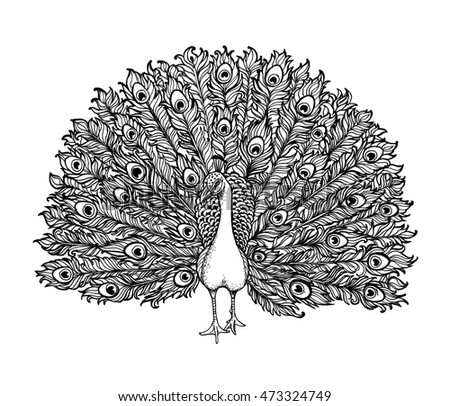 Beautiful Hand drawn Peacock bird consist many details. Clip-art illustration.