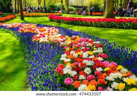 NETHERLANDS - MAY 6, 2016: Blooming flowers in Keukenhof park in Netherlands, Europe.  #474433507
