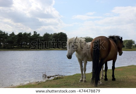 New Forest ponies by the water at Hatchet Pond #474478879