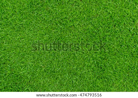 Green grass texture background Top view of bright grass garden Idea concept used for making green backdrop, lawn for training football pitch, Grass Golf Courses green lawn pattern textured background. Royalty-Free Stock Photo #474793516