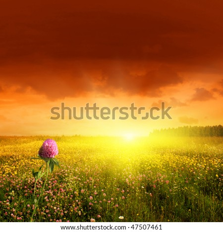 Flower field and sunset. #47507461