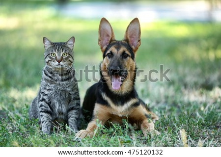 Cute dog and cat on green grass #475120132