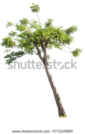 Trees on white background #475269880