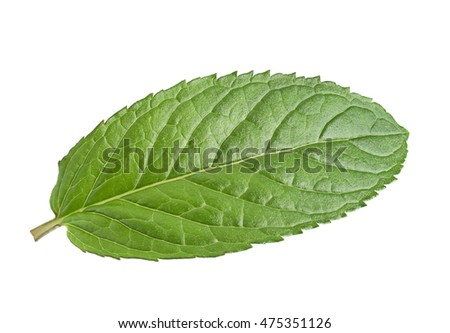 Peppermint leaf closeup isolated on white background #475351126