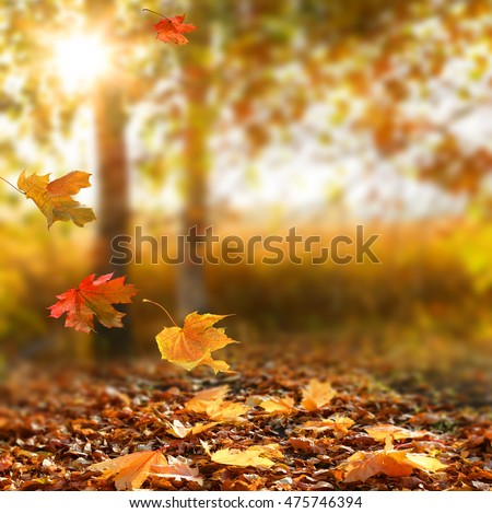Beautiful autumn landscape with yellow trees and sun. Colorful foliage in the park. Falling  leaves natural background .Autumn season concept #475746394